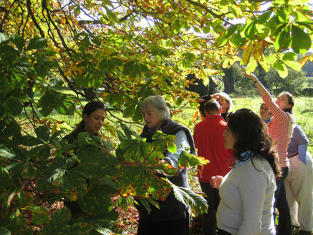 Studying the dynamic growth of the tree with Margaret Colquhoun at Schumacher College. Photo: Simon Robinson