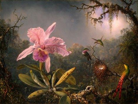 Darwin Origin of species Humming birds