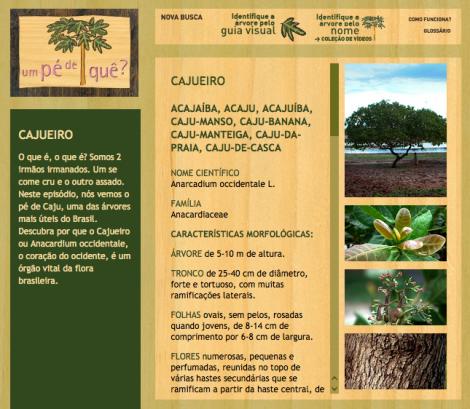 www.umpedeque.com.br