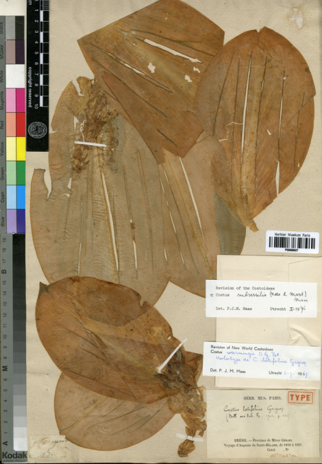 Credit: A. de Saint-Hilaire Virtual Herbarium